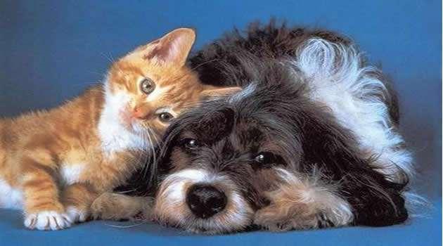 Amici pelosi gatto e cane