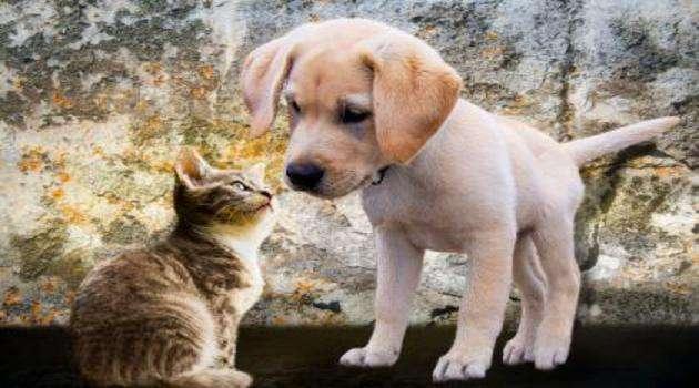 cani e gatti toelettatura