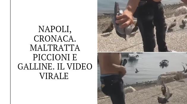Napoli, cronaca. Maltratta piccioni e galline. Il video virale