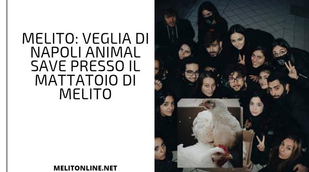Melito: Veglia di Napoli Animal save presso il mattatoio di Melito
